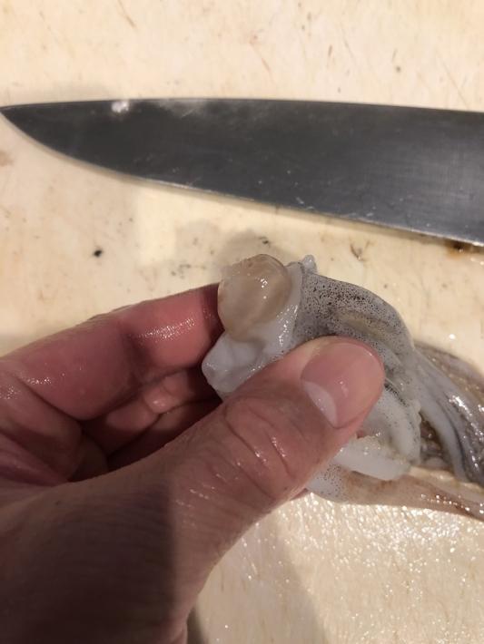 イカのクチバシ