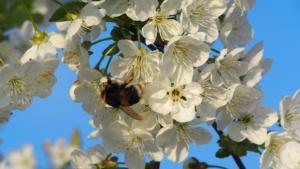 蜂は忙しいからあなたを笑ってない
