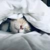 睡眠負債解消のやり方