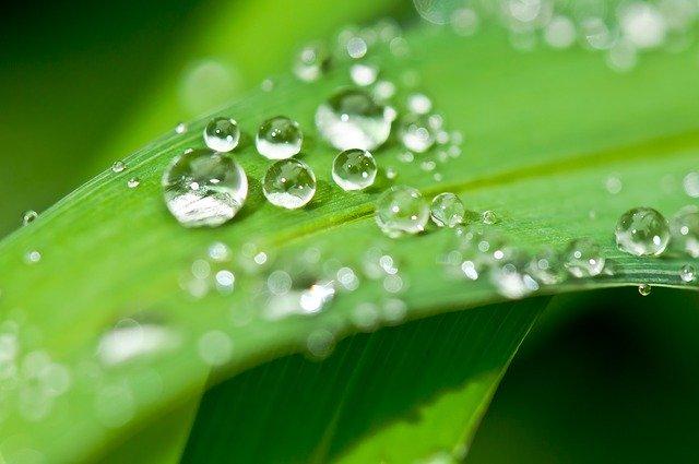 葉っぱの上の水滴