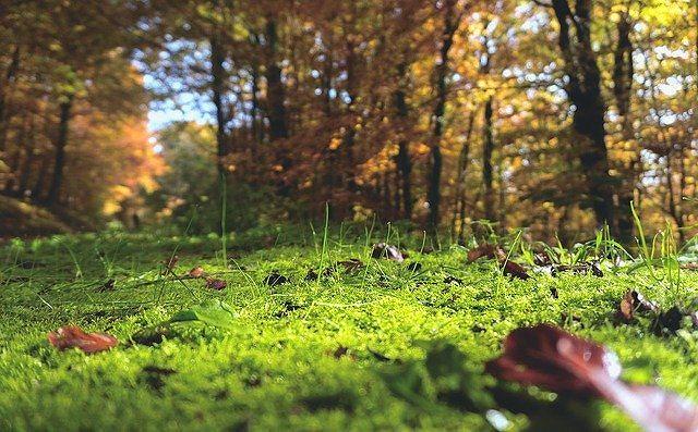 林の中の新緑