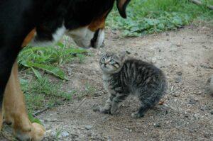 犬に怯える子猫